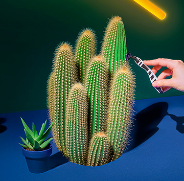 Hand that shaves a cactus with a BIC Flex 5 razor